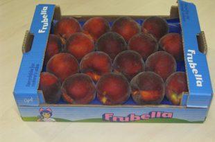 تولید وکیوم شانه میوه